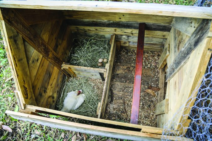Suivez l'opération «Des Poules pour réduire nos déchets» !